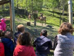 Gita-parco-animalier-Introd-10
